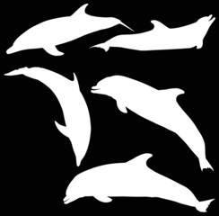 five dolphins isolated on black