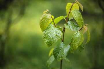 Yağmur Taneleri ve Yaprak
