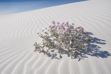 White Sands National Monument, New Mexico (USA)