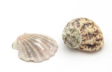 Concha y caracola de mar