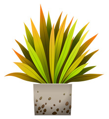 A decorative plant