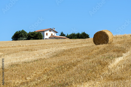 canvas print picture Summer landscape in Marches (Italy)