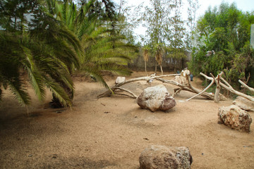 paysage fuerteventura