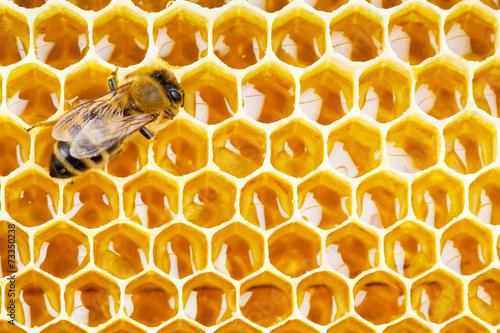 pracująca pszczoła na komórkach plastra miodu