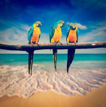 trois perroquets (bleu et jaune Ara (Ara ararauna) connaît également une