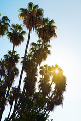 Palm trees at sunrise.
