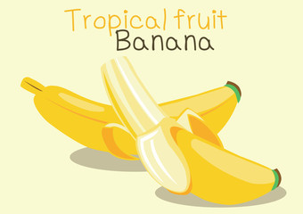 tropical fruit banana. vector illustration