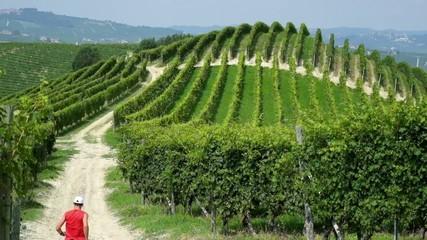 Trail running nelle vigne