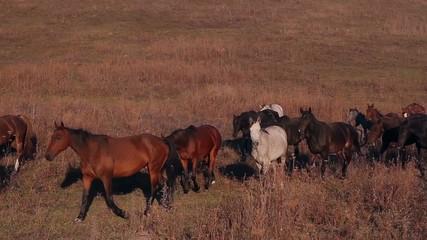 Horses grazing on a farm