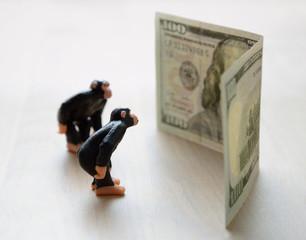 monkey and money, business education