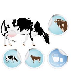 Milk.Cow.Fresh dairy bio product