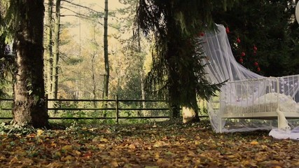 White cot in a autumnal wood