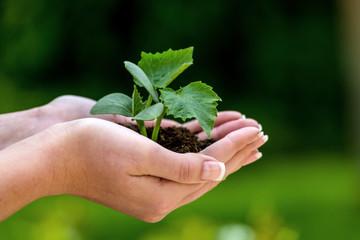 Frau hält Pflanze in der Hand
