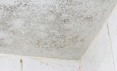 ceiling mould mildew