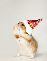 Hamster in christmas red hat