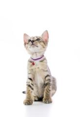 Cute tabby kitten isolated