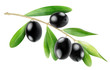 Branch with black olives isolated on white