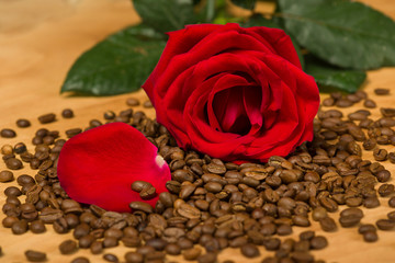red rose on coffee seeds and wooden background