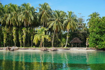 Tropical shore with lush coconut trees and a hut