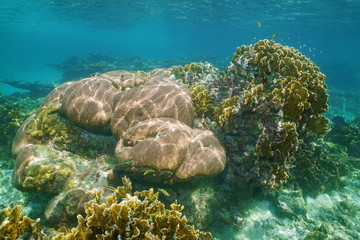 Underwater landscape in a reef of Caribbean sea