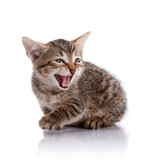The mewing striped small kitten. poster