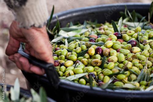 Foto op Aluminium Vruchten Olive pugliesi