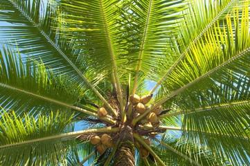 Leaf of palm trees