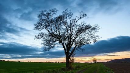 Zeitraffer Wolken und Baum