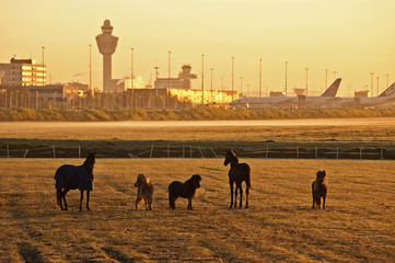 Horses at airport by sunrise