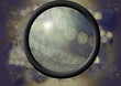 vogelgrippevirus unter mikroskop