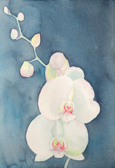 watercolor of phalaenopsis
