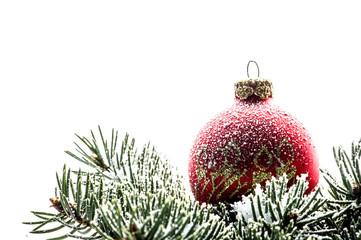 Rote Weihnachtskugel auf Fichtenzweig