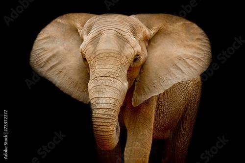 Aluminium Olifant Elephant