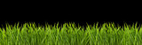 Fototapety Grass on a black background