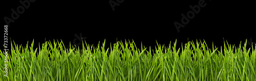 Grass on a black background