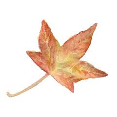 Vector watercolor leaf