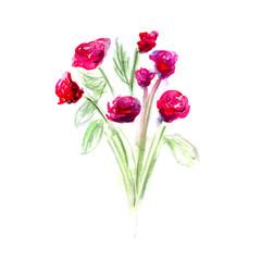 Flower watercolor vector
