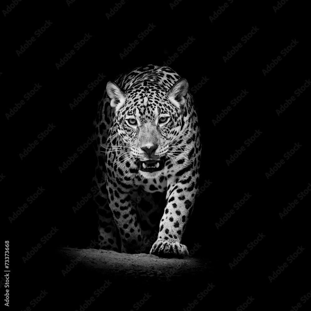 photo sur plexiglas leopard portrait nikkel. Black Bedroom Furniture Sets. Home Design Ideas