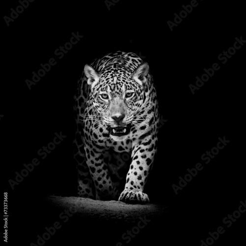 Foto op Aluminium Bestsellers Leopard portrait