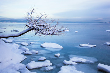 Norwegian winter fjord landscape with tree and ice
