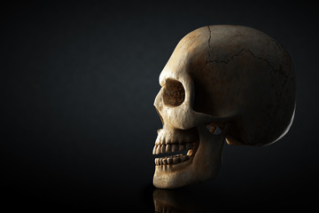 Human skull profile on dark background