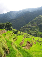 Rice paddies in the north of Luzon Island, Philippines