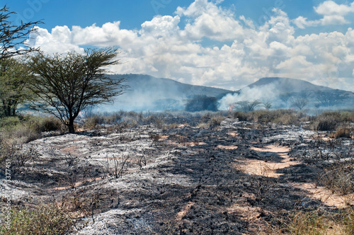 Wildfire in African savanna - 73377451