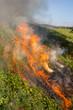 Meadow in fire