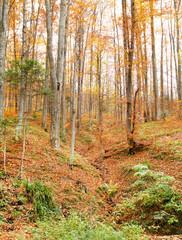 Hill autumn forest landscape