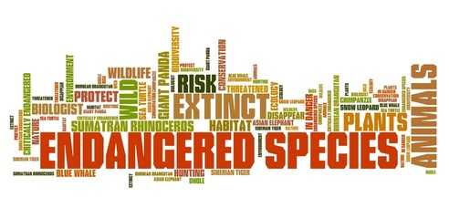 Endangered animals - tag cloud
