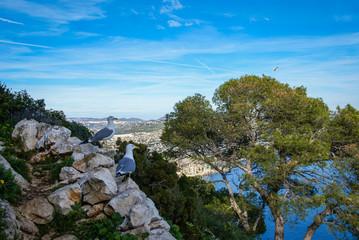 Calp Penial difach, Valencia y Murcia, Spain