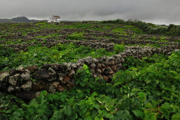 Azores - Terceira - Biscoitos 2