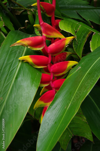canvas print picture La Réunion - Heliconia