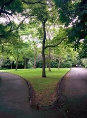 Bifurcation dans un parc irlandais